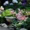 Цветущие коврики: 18 почвопокровных многолетников, фото