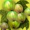 Черная  смородина  с зелеными ягодами. Садоводство
