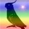Мои любимые попугайчики.  Птицы