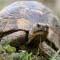 Содержание водных черепах. Как ухаживать за красноухой черепахой и триониксом