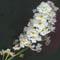 Цветет, цветет черемуха