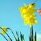 Весенние букеты. Домоводство | Немного об аранжировке  цветов .