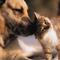 Кошка с  собакой  могут жить дружно.  Собаки