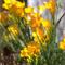 Цветник в  тени . Цветы на даче
