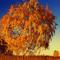 Вторая осень