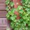 Многолетники из семян. Путь к успеху. Часть 1. Садоводство