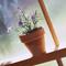 Овощи  на балконе : 5 секретов урожая.  На балконе