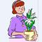 Выращивание глоксиний. Комнатное цветоводство