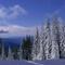 Чему научиться в зимнем лесу