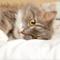 Первая помощь при травмах у кошек. Кошки