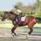 Верховая езда и иппотерапия для  детей