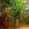 Комнатные  растения: освещение, полив, опрыскивание...