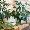Комнатные  растения : какие и где? Правила фитодизайна.