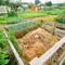 Компост и мульча: как приготовить? Дача и органические отходы.
