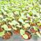 Сидераты: самое доступное удобрение. Без химии и лишних трат