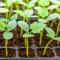 Огурцы в теплице: от рассады до сбора урожая. Как правильно?