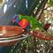 На Тенерифе с ребенком: какие парки стоит посетить