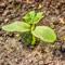 Как избавиться от муравьев, кротов, слизней и сорняков на дачном участке