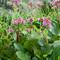 Что посадить на даче в августе? Лекарственные растения – медоносы