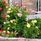 Когда сажать розы весной? Все о посадке роз