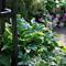 Какие цветы посадить в тени: 12 фото тенелюбивых растений