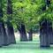 Откуда взялись кипарисы в озере Сукко: отзыв с фото