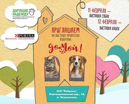 Благотворительная выставка собак и кошек Домой