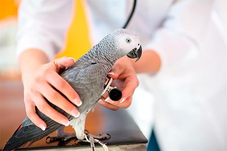 Телеканал Живая Планета бесплатно вылечит экзотических домашних животных