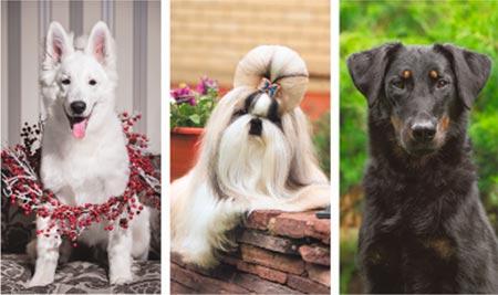 Первая научно-образовательная конференция для заводчиков собак