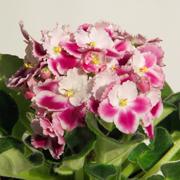 Ирина Кабанова: Цветы на снегу