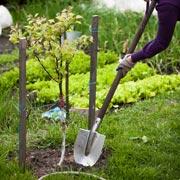 Павел Траннуа: Как правильно посадить яблоню, грушу, вишню, чтобы им хватило тепла