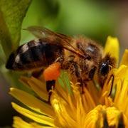 Аллергия на укусы комаров, ос и пчел: как выглядит и что делать?