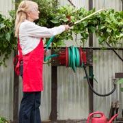 Чем обработать сад после цветения