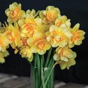 Эрин Бензакейн: Когда выкапывать и сажать нарциссы и тюльпаны