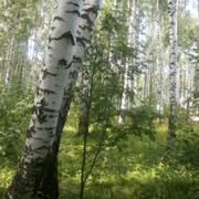 Отдых на природе для меня – это звуки и запахи леса