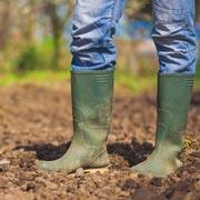 Сколько гумуса в почве на вашем участке? Тестируем и улучшаем почву