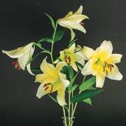 Эрин Бензакейн: Лилии отцвели. Когда пересаживать лилии?