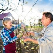 Обрезка яблони осенью: какие ветки убрать, а какие оставить