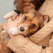 Д. Кондор: Лишний вес и ожирение у собак и кошек