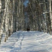 Ясная Поляна зимой: экскурсия с фото