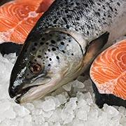 Какая рыба полезнее – замороженная, охлажденная или живая?