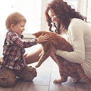 Как выбрать котёнка для семьи с детьми