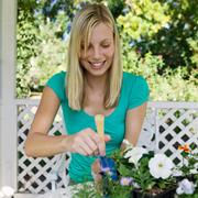 Как вырастить рассаду петунии и лобелии из семян. Советы цветовода