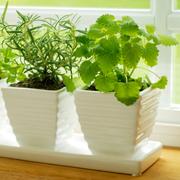 Комнатные растения: освещение, полив, опрыскивание, температура - 4 главных условия