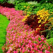 Пейзаж придомовой садово-луговой