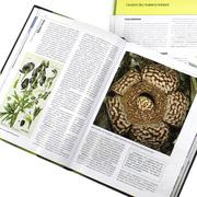 Ботаника для мальчиков и девочек: детские книги о растениях