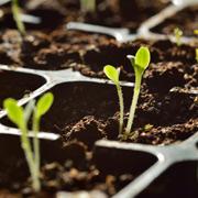 В. Озерова: Семена для будущего урожая: хранение и проращивание