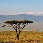 Путешествие в Кению и Танзанию