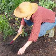 Хватит поливать грядки! Как сохранить влагу в почве: газон и другие способы
