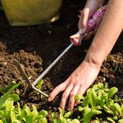 Хватит полоть грядки! Что делать с сорняками: мульча и газон